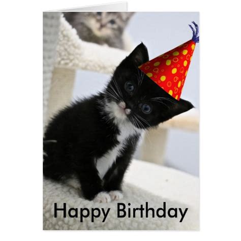 Happy Birthday Cat Card Happy Birthday Kitten Card Zazzle