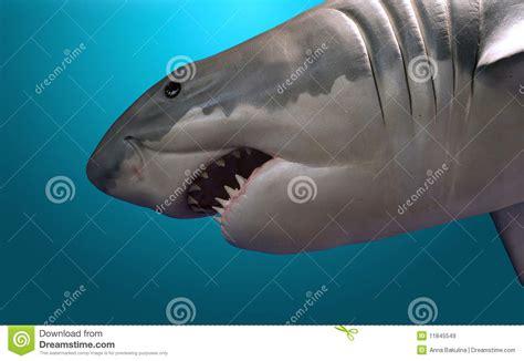 Tlf 45 Shark shark royalty free stock images image 11845549