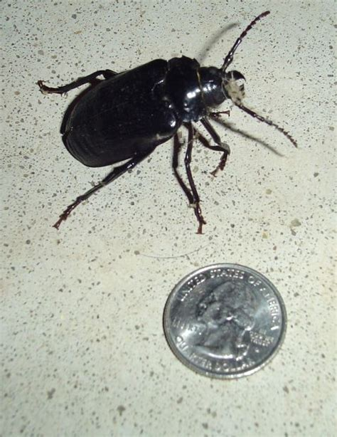 does renters insurance cover bed bugs are bed bugs covered on a renters insurance policy