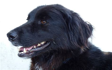 signs of failure in dogs signs of periodontl disease in dogs dogs health problems