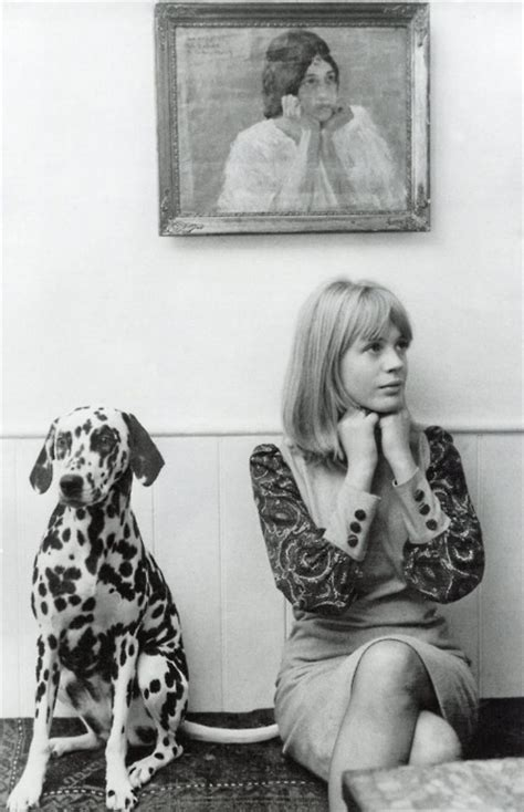 puppy singer 1960 1960 s images marianne faithfull wallpaper and background photos 33264037