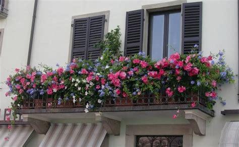 da terrazzo fiori da terrazzo il verde