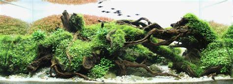 moko aquascape shop gallery