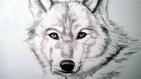 Drawings Of Animals by Cool Drawings Of Animals Drawing Sketch Galery