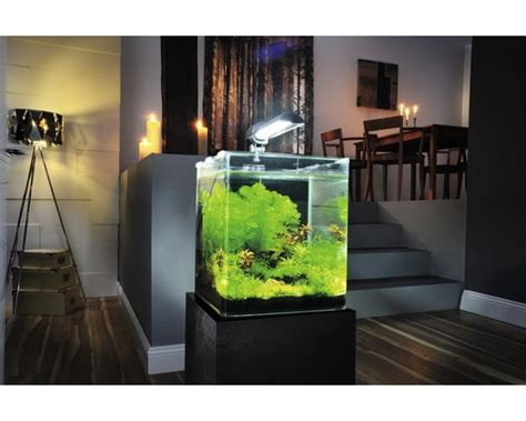 beleuchtung 60l aquarium nano cube dennerle complete plus 30 litres pictures to pin