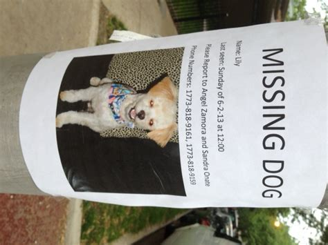 missing dogs image gallery missingdog