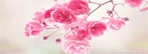 meilleur photo couverture fleurs photo et image