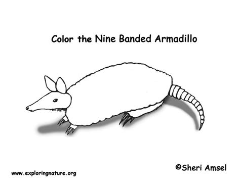 armadillo lizard coloring page armadillo coloring page exploring nature educational