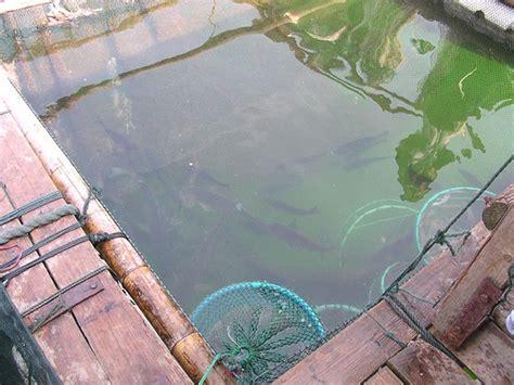 backyard aquaculture backyard aquaponics basics create a sustainable food source in your backyard