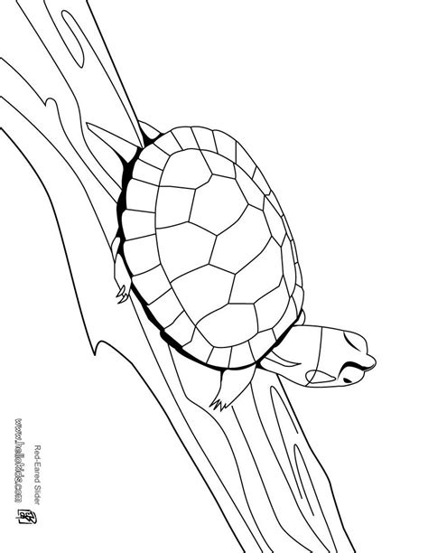 coloring pages loggerhead turtle turtle coloring pages wonderful ninja turtles with grig3 org