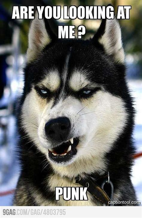 badass dogs 9gag badass 110470 on wookmark