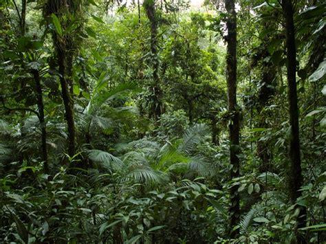 natureza atividade agr 237 cola impactou florestas brasileiras revela estudo na science