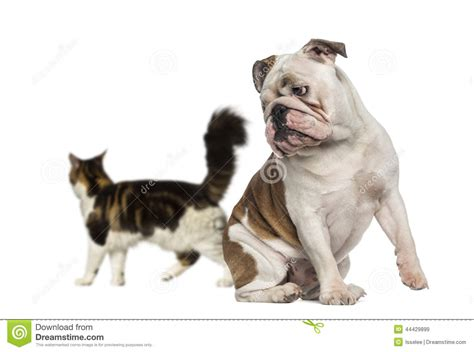 Easy Apartment Dogs Dogs And Cats Breed Bouledogue Franais Bulldog Dogs