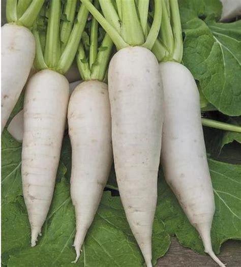 come si cucinano i topinambur la rapa un ortaggio resistente per le semine autunnali