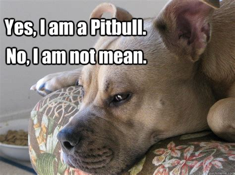 Pitbull Memes - memes are not dangerous pit bulls