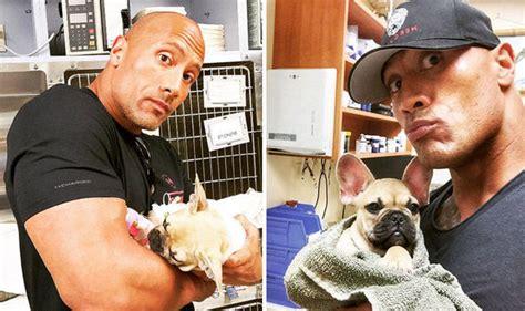 the dog house little rock dwayne the rock johnson mourns pet dog brutus after he