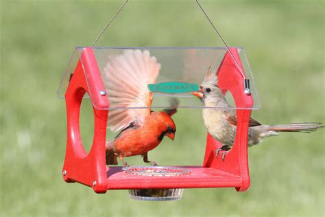 duncraft com eco strong cardinal feeder