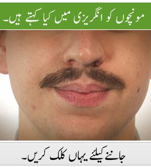 The Moustache Is A Goner by Toast Urdu Meaning