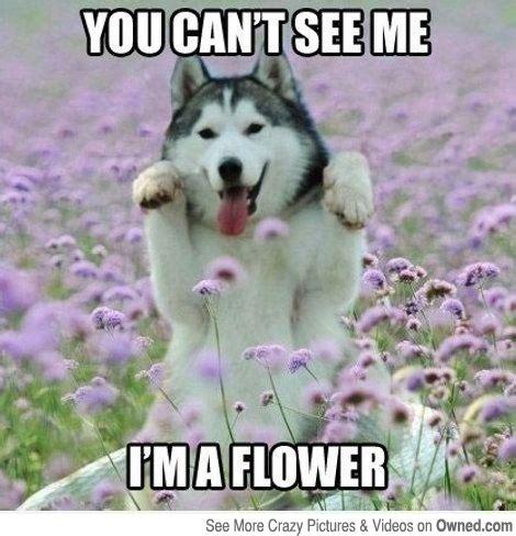 Dog Lover Meme - 11 comments that make dog owners cringe barkpost