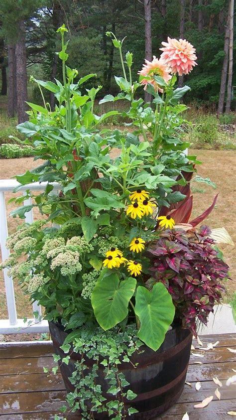 container gardening pdf dahlias container gardening and gardening on