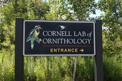 cornell lab of ornithology diy