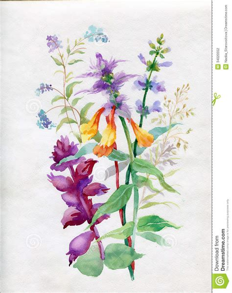 watercolor tattoo wildflowers watercolor wildflowers and grasses stock illustration
