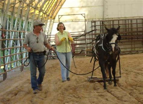 harness lessons with doc hammill friends books gait workshop day 2 doc hammill horsemanship