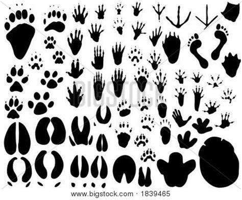 printable animal feet picture or photo of collection of vector outlines of