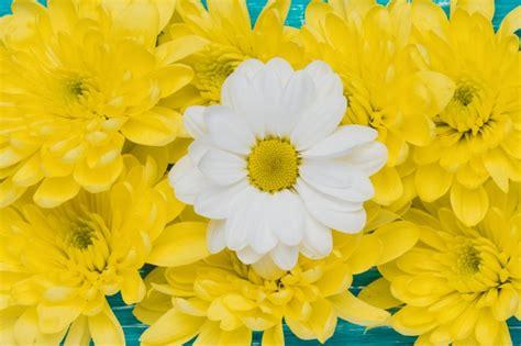 galera de imgenes y fotos bonitas fotografas de rosas color imgenes de flores gratis fabulous flores png ramos etc