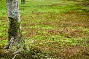 green natural background with moss and tree stock photo