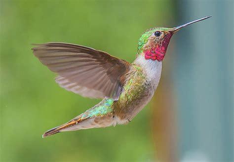 attract hummingbirds to your garden birdhousesupply com
