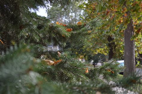 locate an iowa tree farm for a locally grown christmas
