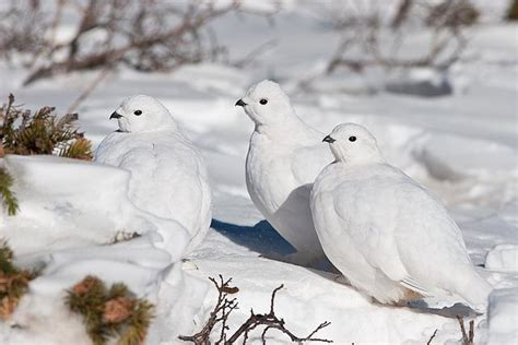 what birds do in winter