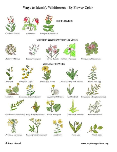 Container Gardening Guide - 20 best images about wildflower id book for kids on pinterest white flowers geometry