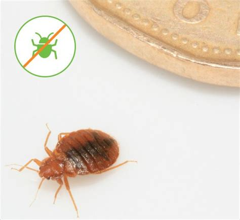 information about bed bugs visit our bed bugs blog