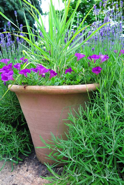 images of 6 flowers in pots the best plants for amazingly low maintenance garden pots the middle sized garden gardening