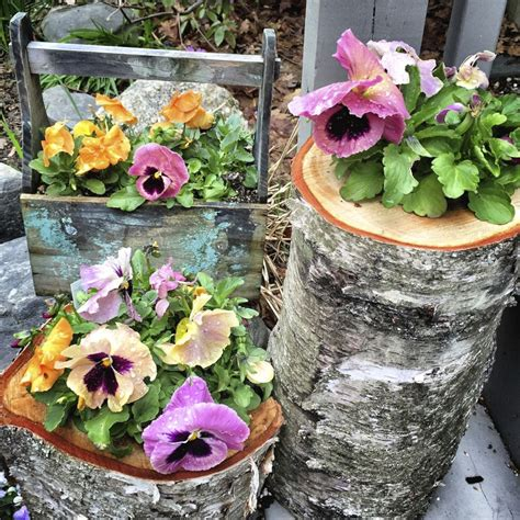 Planter Ideas Sun by Choosing Plants For Container Gardens