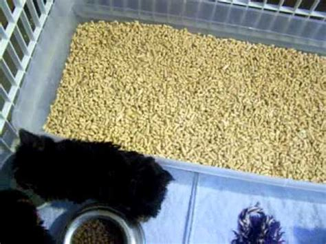 can you a yorkie to use a litter box new puppy litter box part 4 doovi