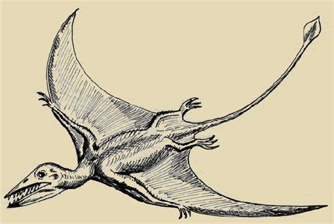 lucertola volante quetzalcoatlus related keywords quetzalcoatlus