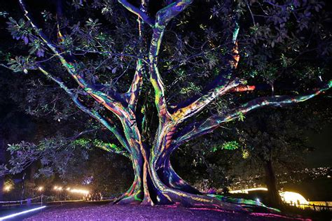 Botanical Garden In Sydney Lights Up In Rainbow Colours Lp Zoo Lights