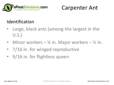 the carpenters guide treating on lines and the square also giving practical and methods on carpentry classic reprint books guide to treat get rid of carpenter ants from epestsolutions