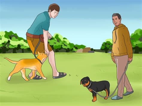 when to start your puppy how to start walking your puppy 15 steps with pictures