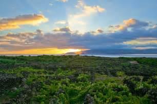 landscape of the pico island vineyard culture wikipedia