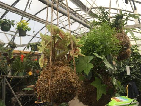 hanging plants    kokedama espoma
