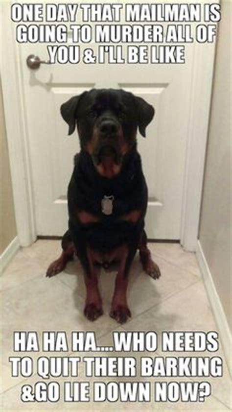 do rottweilers bark a lot 1000 ideas about rottweiler on rottweilers rottweiler puppies and