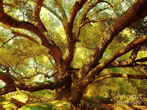 magic tree magic tree photograph by robert