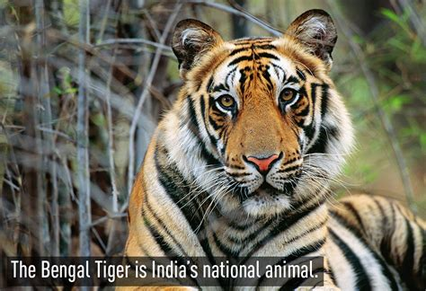 Inidia Cat 27 interesting facts about india guides