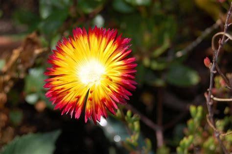 vasi fiori dwg piante grasse cascanti con fiori fioriere e aiuole