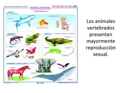 191 que comen los animales vertebrados 191 de que se alimentan ejemplos de animales en reproduccion reproducci 243 n en