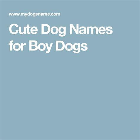 can i give my yorkie benadryl names boys dogs names and names
